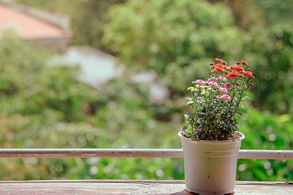 Comment estimer un appartement avec jardin - BienEstimer by SAFTI
